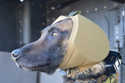 Canine Auditory Protection System (CAPS)